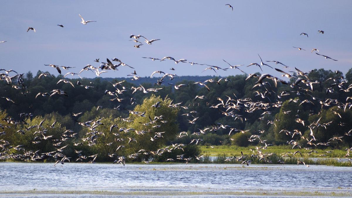 Ptasi raj w Parku Narodowym Ujście Warty