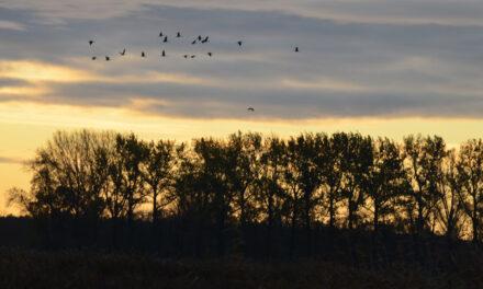Dziennik #2.2 Park Narodowy Ujście Warty – Dzika Odyseja Banysiów
