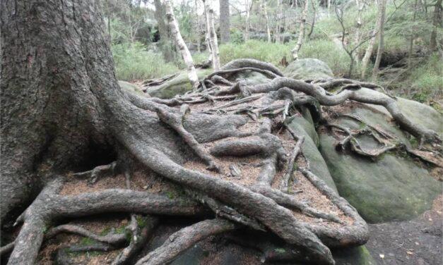 Dziennik #3.4 Park Narodowy Gór Stołowych – Dzika Odyseja rodziny Nowickich