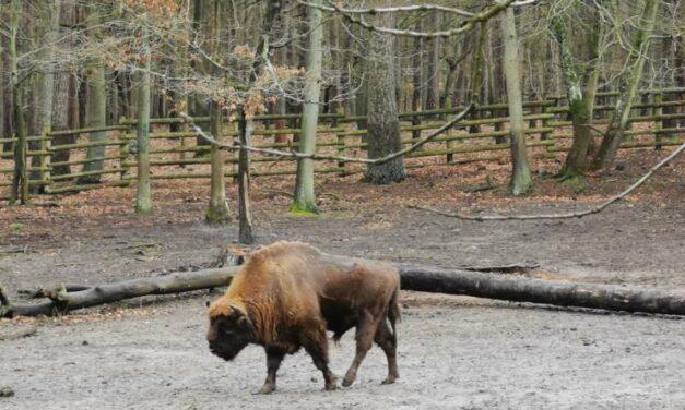 DZIENNIK #6.6 Woliński Park Narodowy – Dzika Odyseja rodziny Łuszczaków